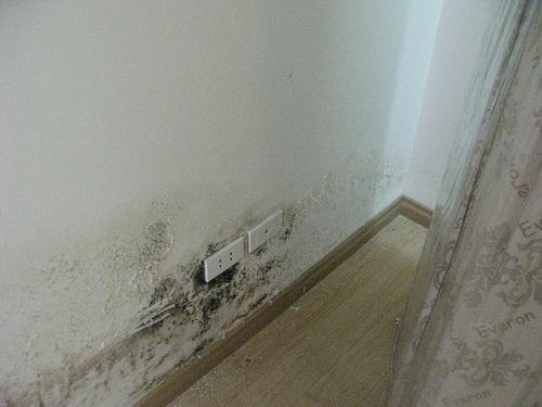Gạch ốp tường chống thấm 4